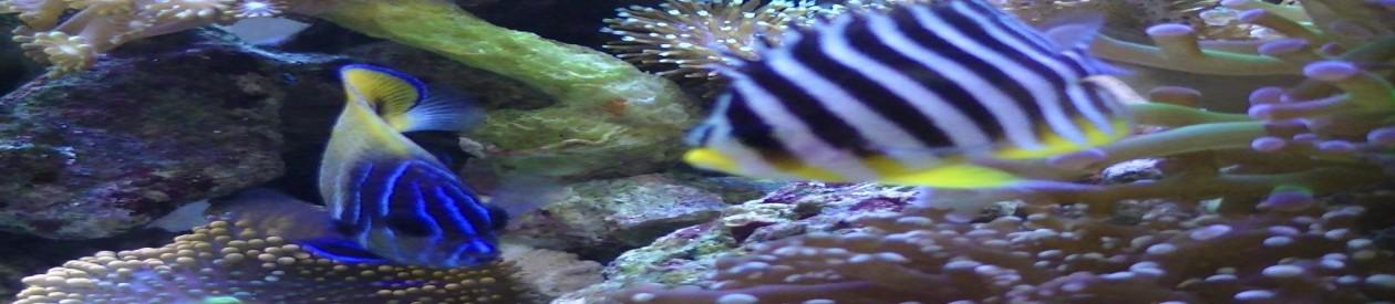 海水魚水槽 森里屋